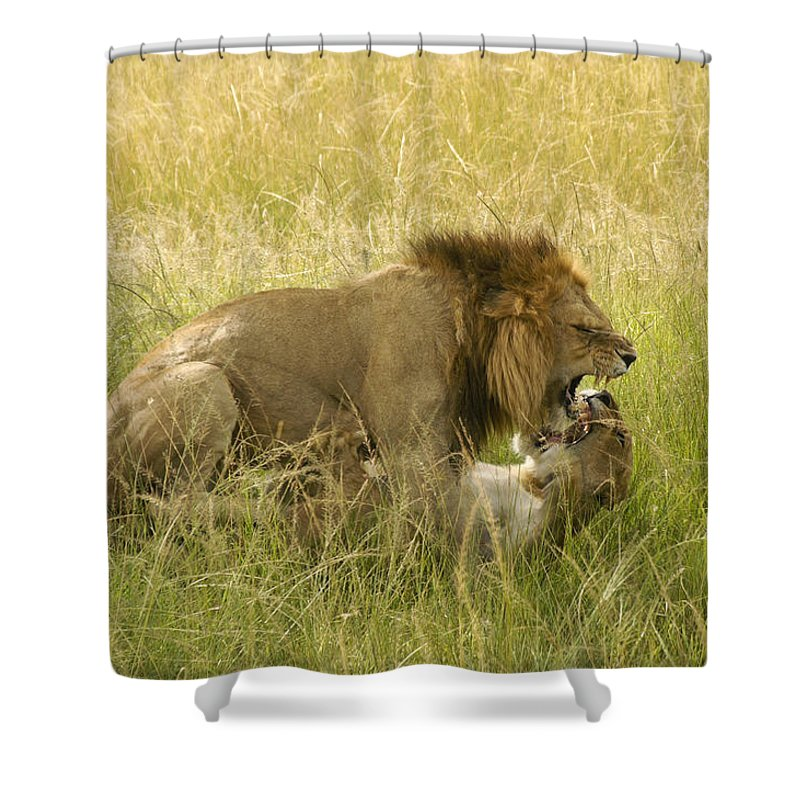 Africa Shower Curtain featuring the photograph Love In The Wild by Michele Burgess