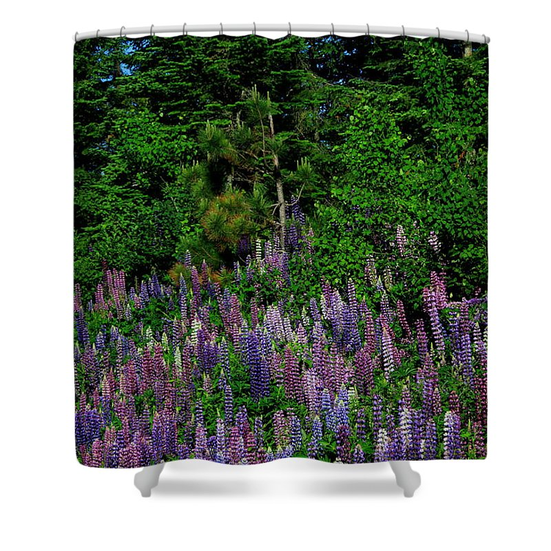 Lupines Shower Curtain featuring the photograph Lupines by Joi Electa