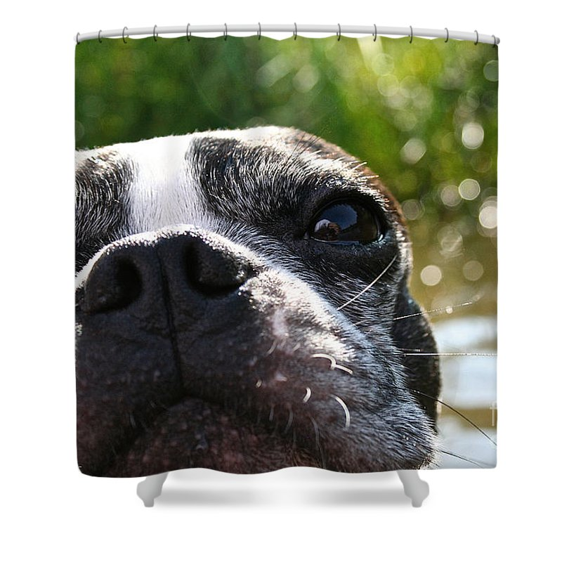 Outdoors Shower Curtain featuring the photograph Luv A Mug by Susan Herber