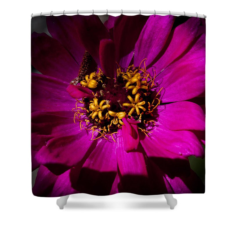 Flower Shower Curtain featuring the photograph Magenta Light by David Patterson