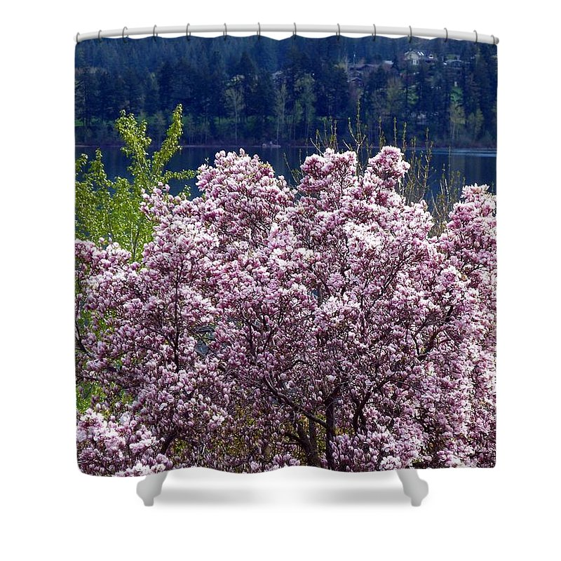 Magnolia Tree Shower Curtain featuring the photograph Magnolia By The Lake by Will Borden