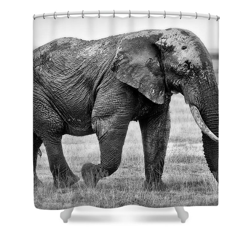 Elephants Shower Curtain featuring the photograph Majestic African Elephant by Jack Daulton