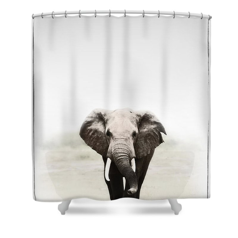 Elephants Shower Curtain featuring the photograph Majestic Elephant 2 by Jack Daulton