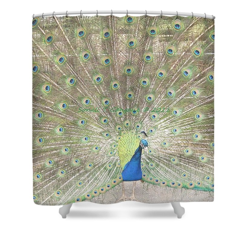 Colourful Shower Curtain featuring the photograph Majestic Peacock by Sonali Gangane