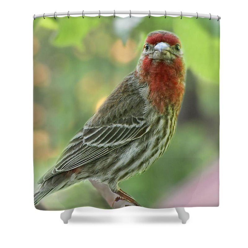 Nature Shower Curtain featuring the photograph Male House Finch by Debbie Portwood