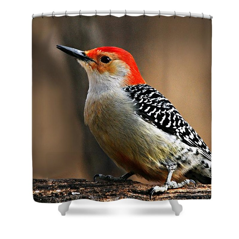 Photography Shower Curtain featuring the photograph Male Red-bellied Woodpecker 4 by Larry Ricker