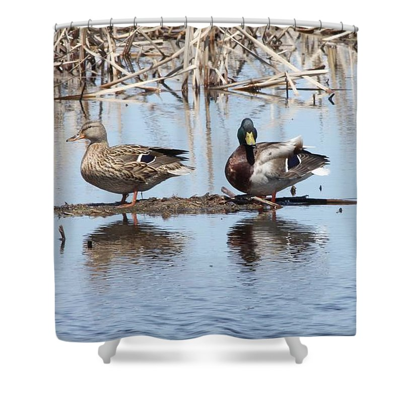 Duck Shower Curtain featuring the photograph Mallard Ducks Sitting On A Sandbar by Lori Tordsen