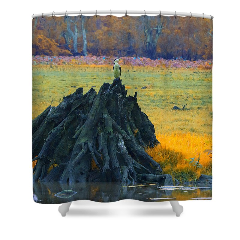 Dead Mangrove Tree Shower Curtain featuring the photograph Mangrove Lookout by Douglas Barnard