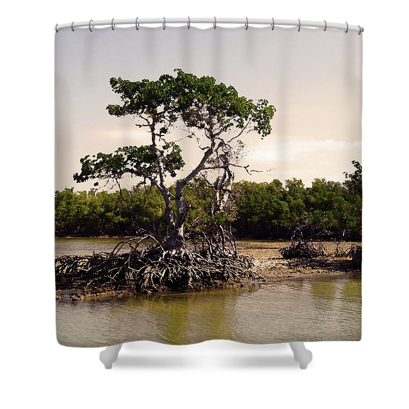 Everglades Shower Curtain featuring the photograph Mangroves In The Everglades by HD Hasselbarth