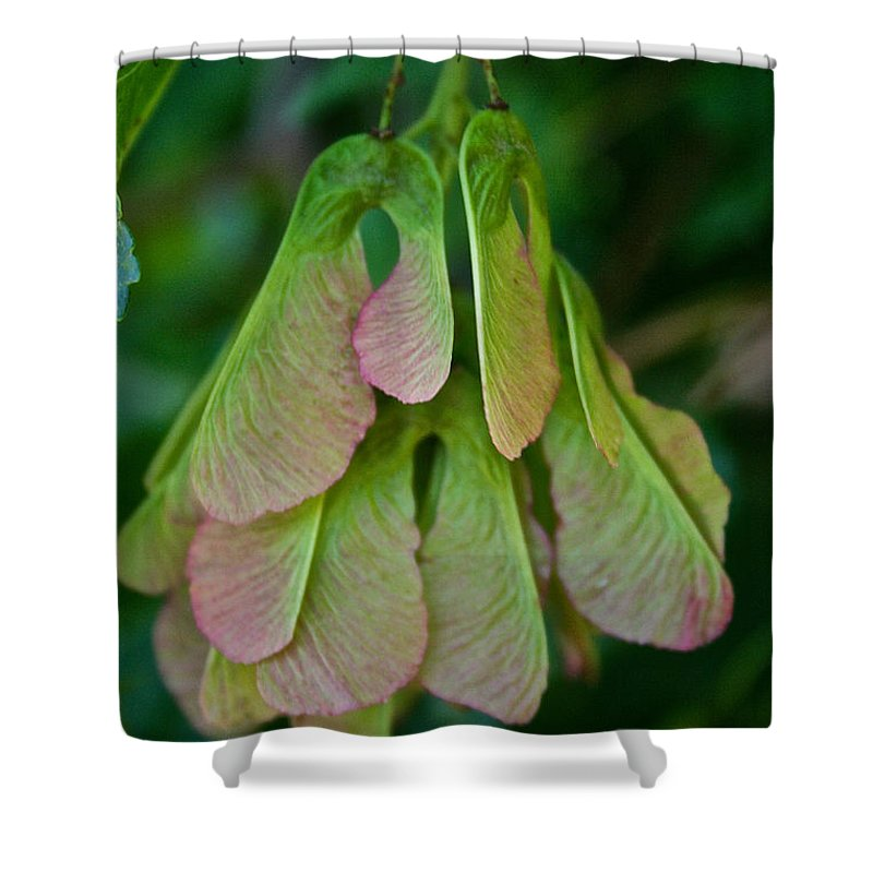 Outdoors Shower Curtain featuring the photograph Maple Seed by Susan Herber