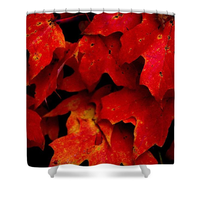 Maples Shower Curtain featuring the photograph Maples by Ed Smith