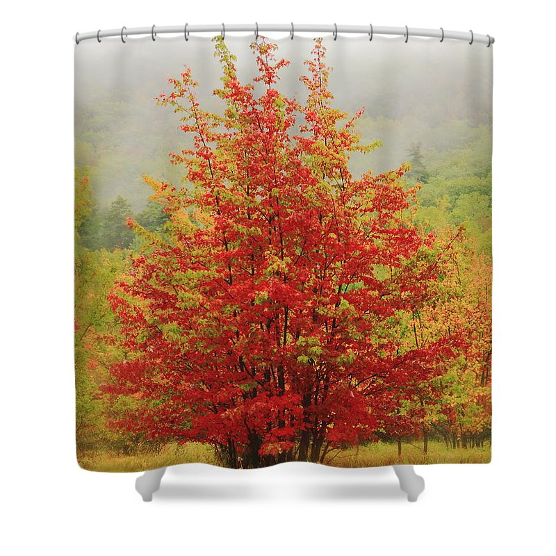 Maples Shower Curtain featuring the photograph Maples In The Mist by Roupen Baker