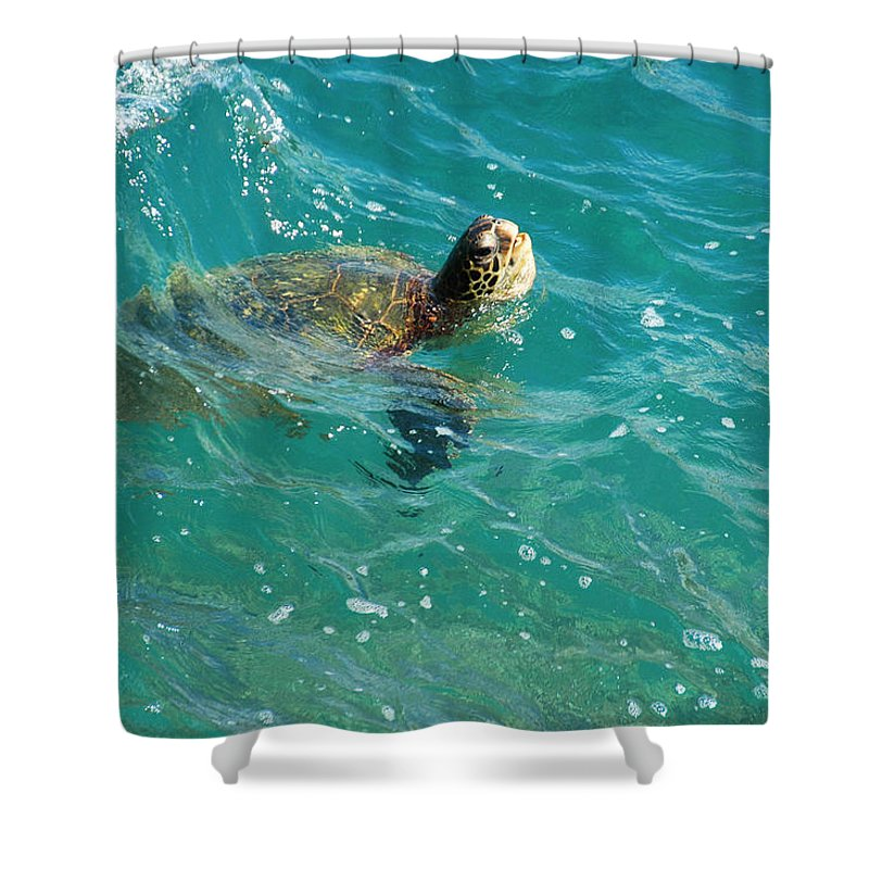 Turtle Shower Curtain featuring the photograph Maui Sea Turtle by Lynn Bauer