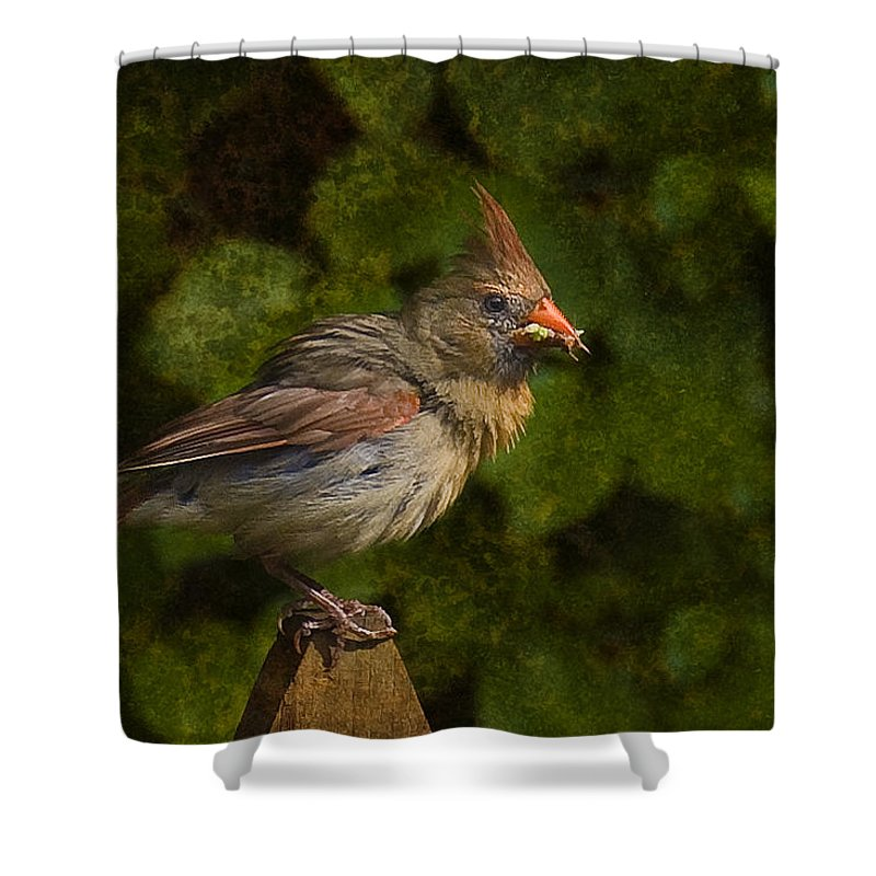 Cardinal Shower Curtain featuring the photograph Meal Time by Steven Richardson