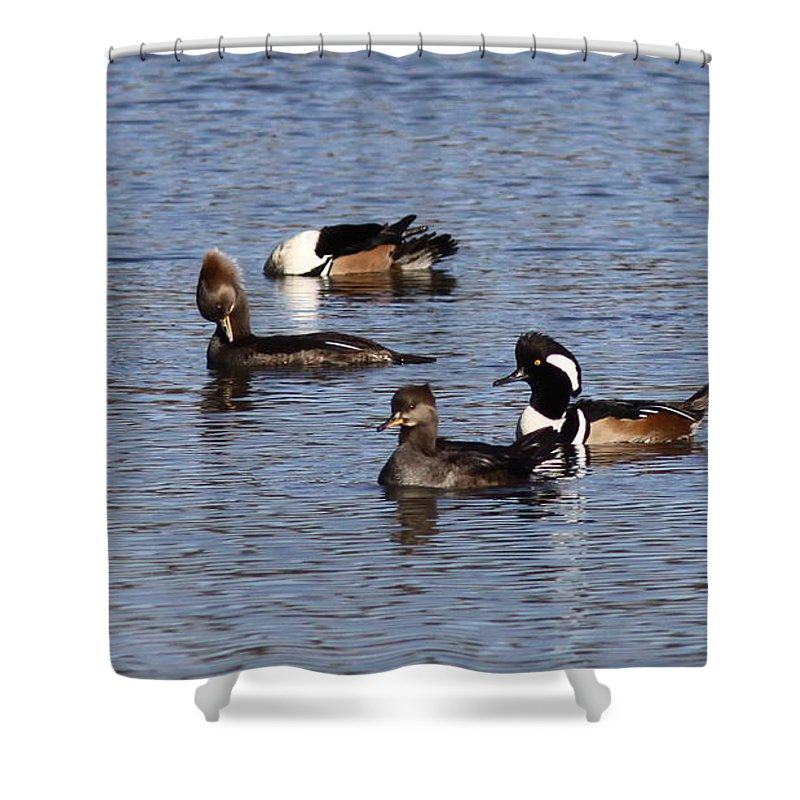 Merganser Shower Curtain featuring the photograph Mergansers After The Rain by Travis Truelove