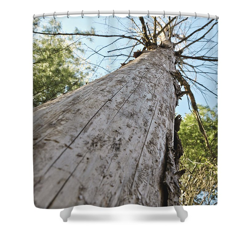 Usa Shower Curtain featuring the photograph Mighty Tree And The Bark Beetle by LeeAnn McLaneGoetz McLaneGoetzStudioLLCcom