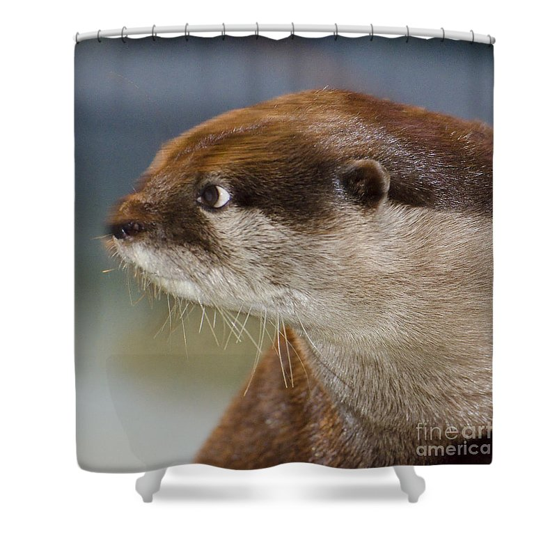 Sea Otter Shower Curtain featuring the photograph Mischief by Jim And Emily Bush