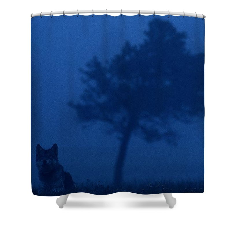 Gray Wolves Shower Curtain featuring the photograph Misty View Of A Gray Wolf Canis Lupus by Joel Sartore