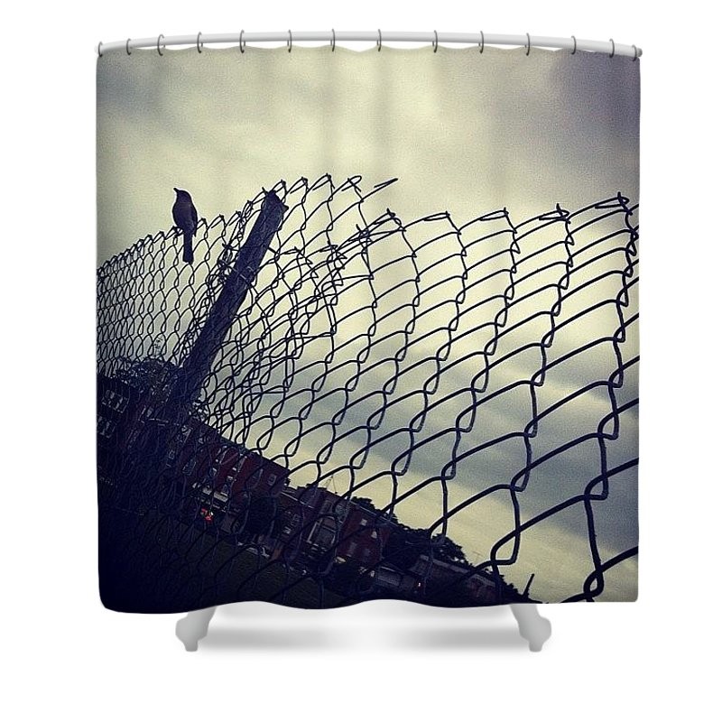 Mockingbird Shower Curtain featuring the photograph Mock. Yeah! Ing. Yeah! Bird. Yeah! by Katie Cupcakes