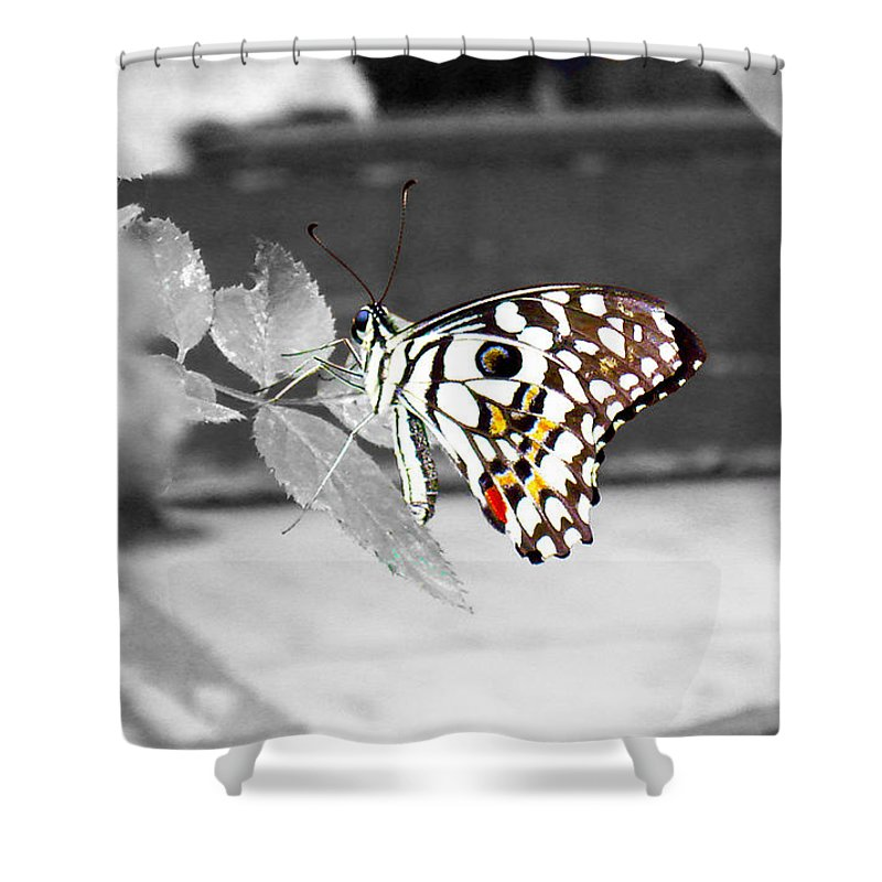 Butterfly Shower Curtain featuring the photograph Monochromatic Butterfly by Sumit Mehndiratta