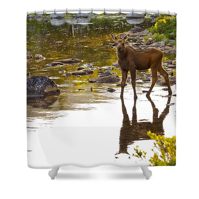 Moose Shower Curtain featuring the photograph Moose Baby 2 by Glenn Gordon
