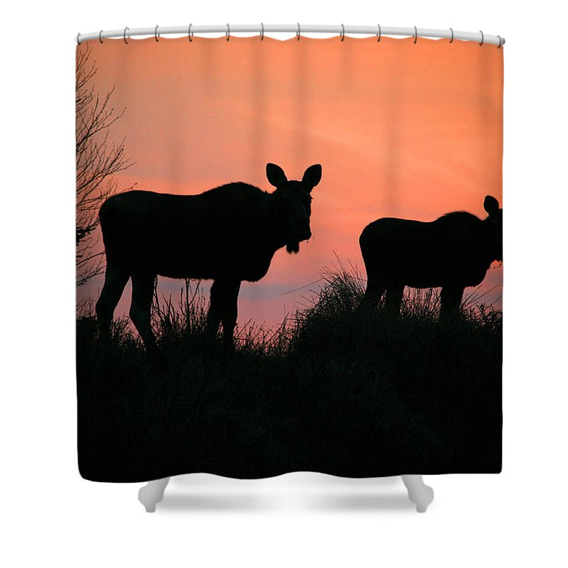 Light Shower Curtain featuring the photograph Moose Silhouetted At Sunset by Robert Postma