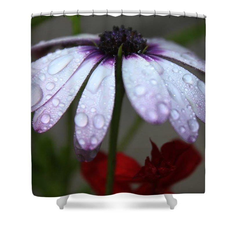 Rain Shower Curtain featuring the photograph Morning Rain by Lauri Novak