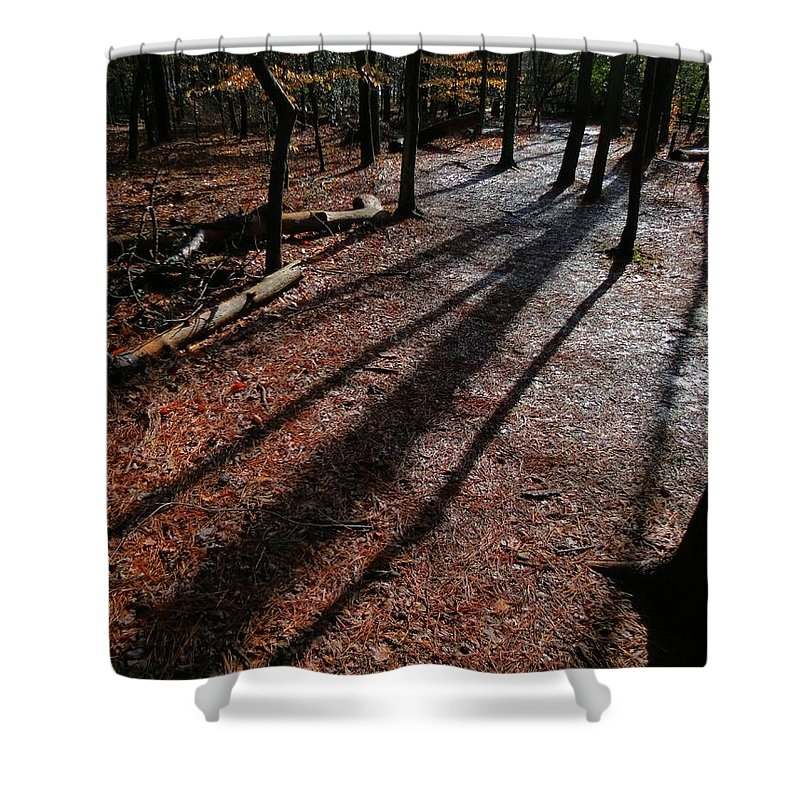 Trees Shower Curtain featuring the photograph Morning Shadows by Rrrose Pix