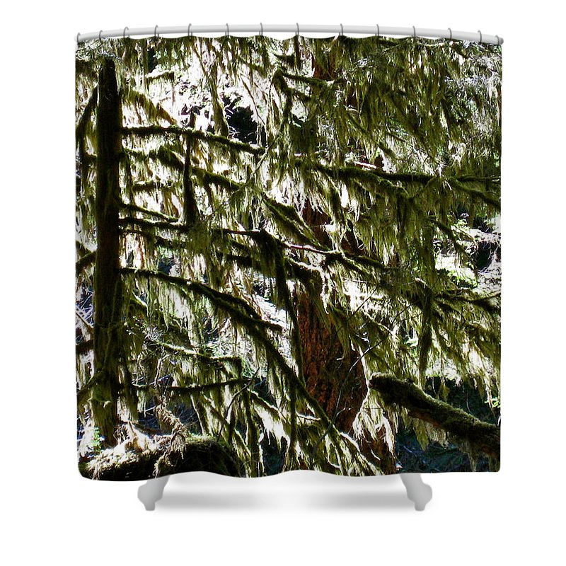 Moss Shower Curtain featuring the photograph Moss On Trees by Linda Hutchins