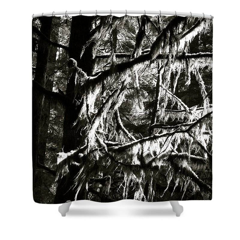 Trees Shower Curtain featuring the photograph Mossy Trees In Black And White 2 by Linda Hutchins