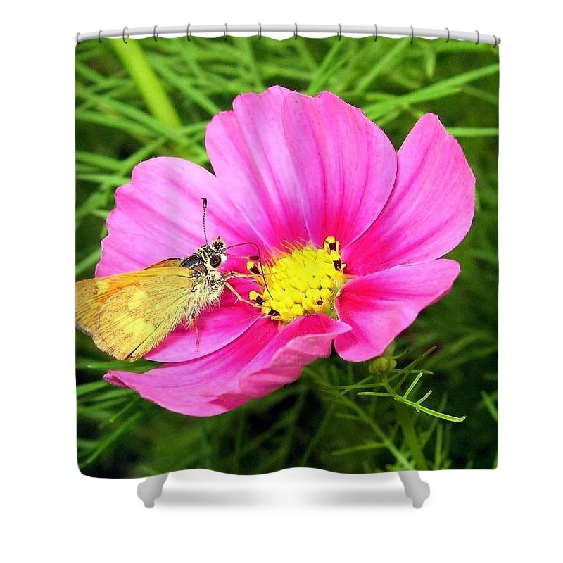 Moth Shower Curtain featuring the photograph Moth On A Cosmos by Will Borden