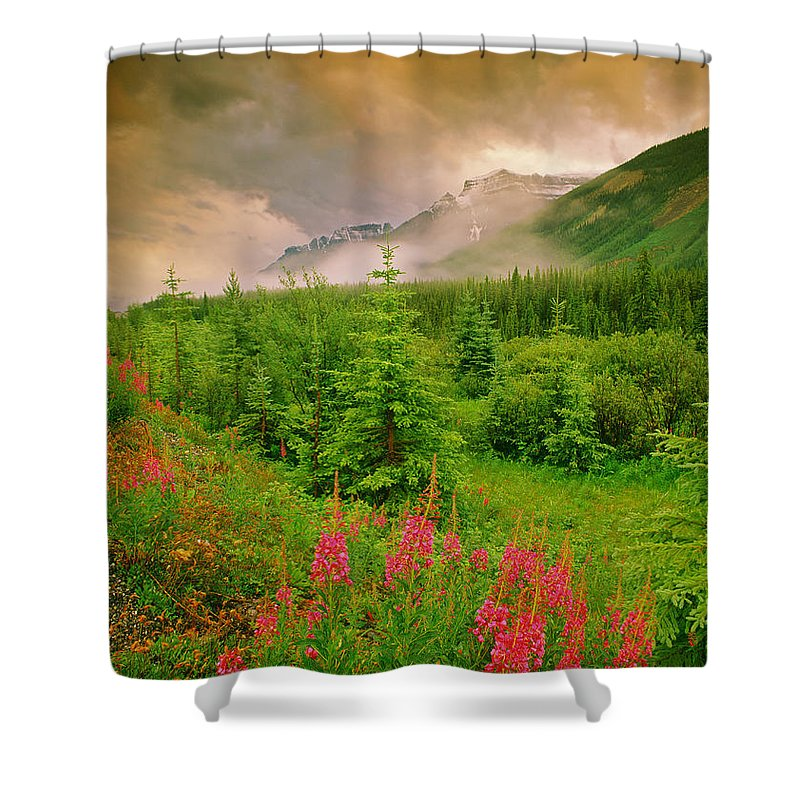 Light Shower Curtain featuring the photograph Mount Amery And Fireweed by Darwin Wiggett