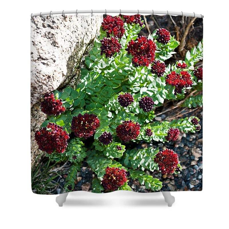 Mount Shower Curtain featuring the photograph Mountain Blooms by Colleen Coccia
