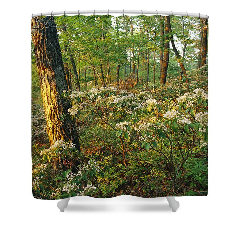 North America Shower Curtain featuring the photograph Mountain Laurel Blooming In A Hyner by Skip Brown
