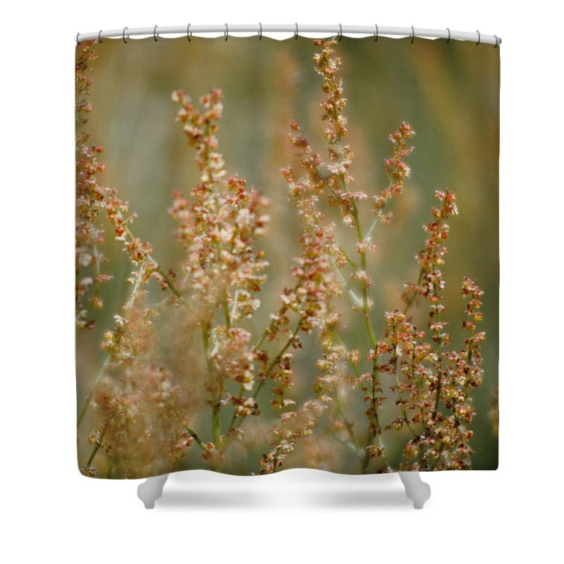 Mountain Sorrel Shower Curtain featuring the photograph Mountain Sorrel by One Rude Dawg Orcutt