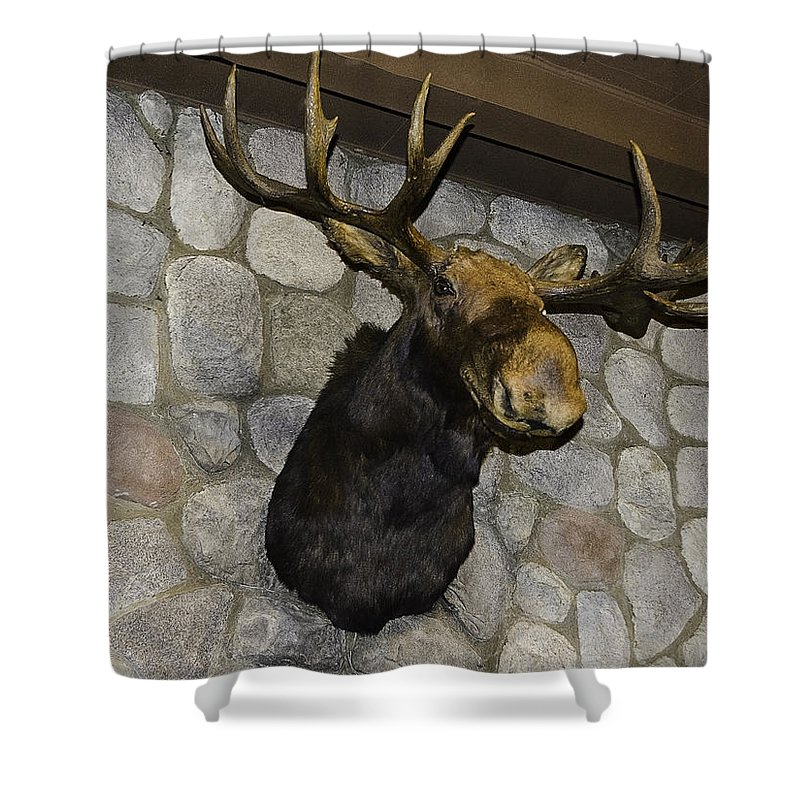Usa Shower Curtain featuring the photograph Mounted Moose by LeeAnn McLaneGoetz McLaneGoetzStudioLLCcom