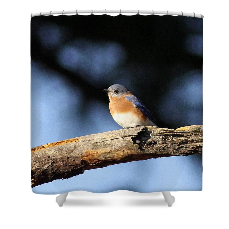 Bluebirds Shower Curtain featuring the photograph Mr. Bluebird by Travis Truelove