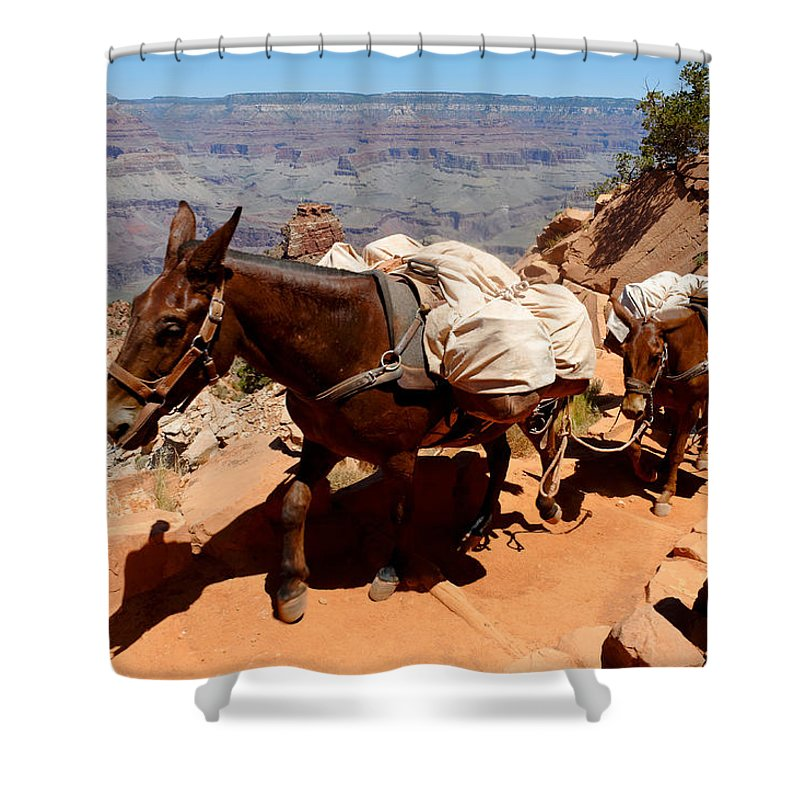 Mule Shower Curtain featuring the photograph Mule Train by Julie Niemela