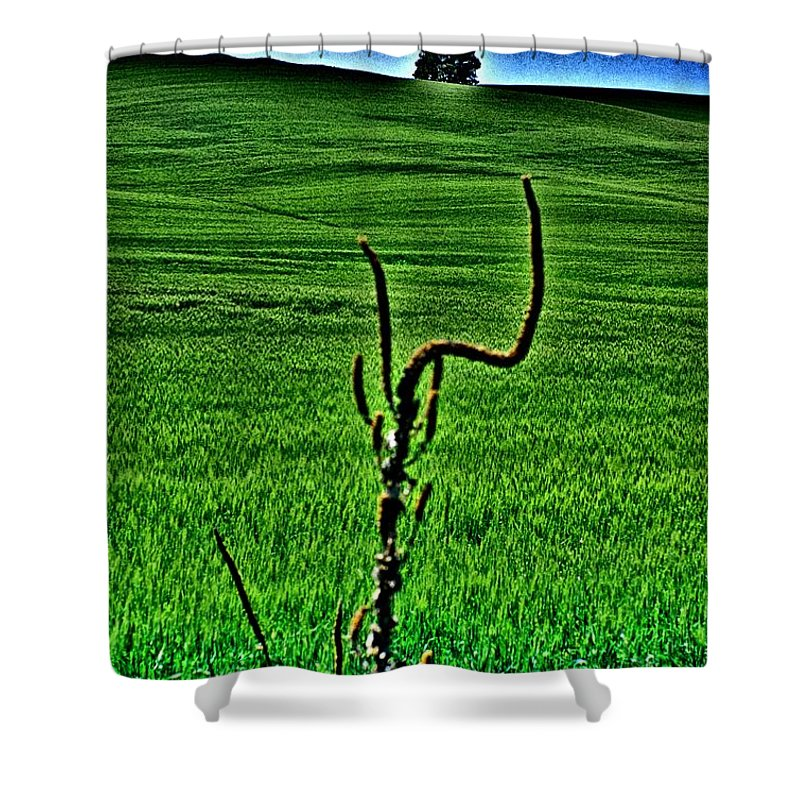 Mullein Shower Curtain featuring the photograph Mullein Frame by One Rude Dawg Orcutt