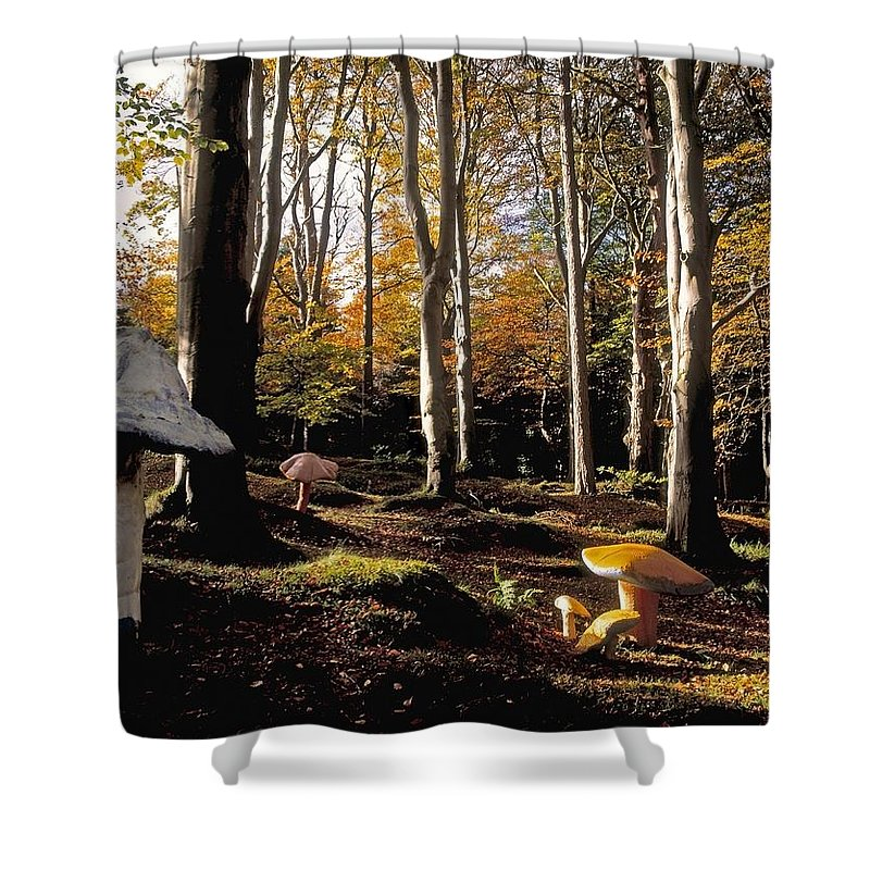Color Image Shower Curtain featuring the photograph Mushrooms In A Forest by The Irish Image Collection