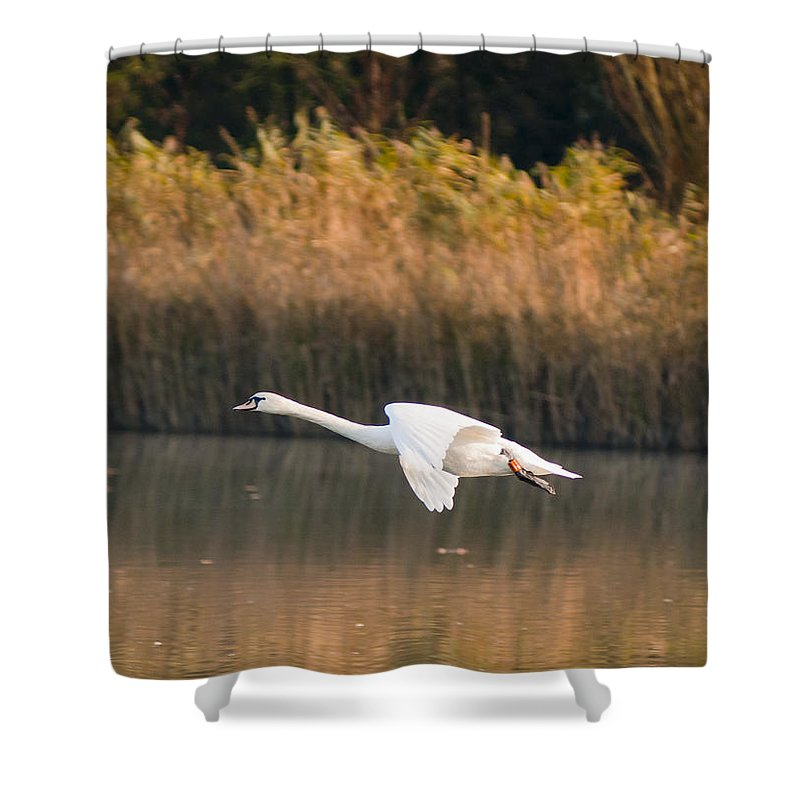 England Shower Curtain featuring the photograph Mute Swan by Andrew Michael