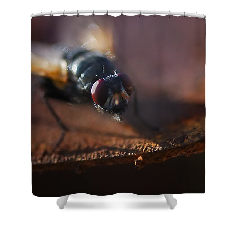 Nature Shower Curtain featuring the photograph My My My Little Fly by Susan Capuano