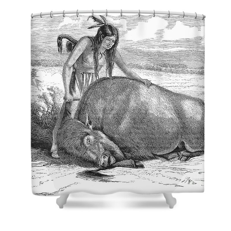 19th Century Shower Curtain featuring the photograph Native Amerians: Cutting Buffalo by Granger