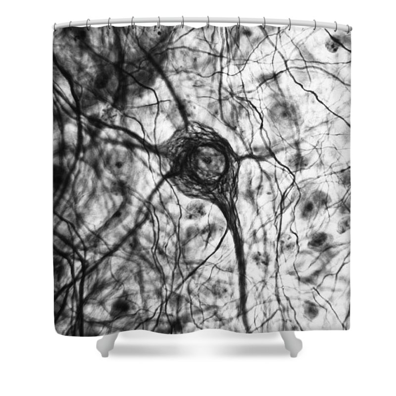 Cell Shower Curtain featuring the photograph Neuron, Tem by Omikron