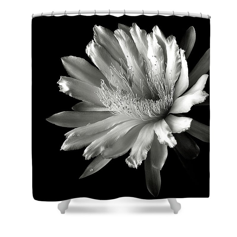 Flower Shower Curtain featuring the photograph Night Blooming Cereus In Black And White by Endre Balogh