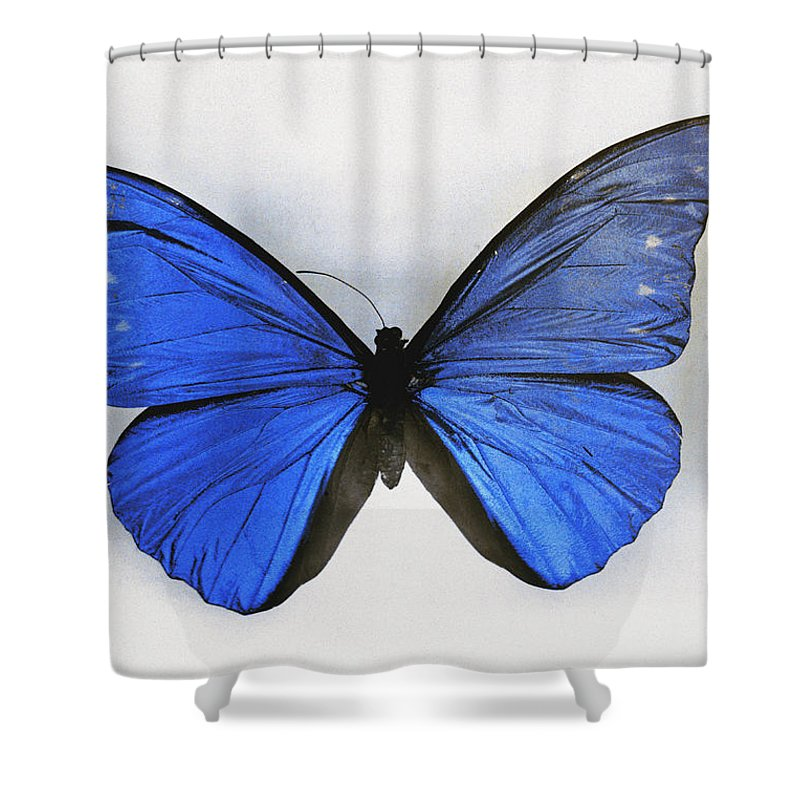 butterflies Shower Curtain featuring the photograph No Original Legend Information by Charles Martin