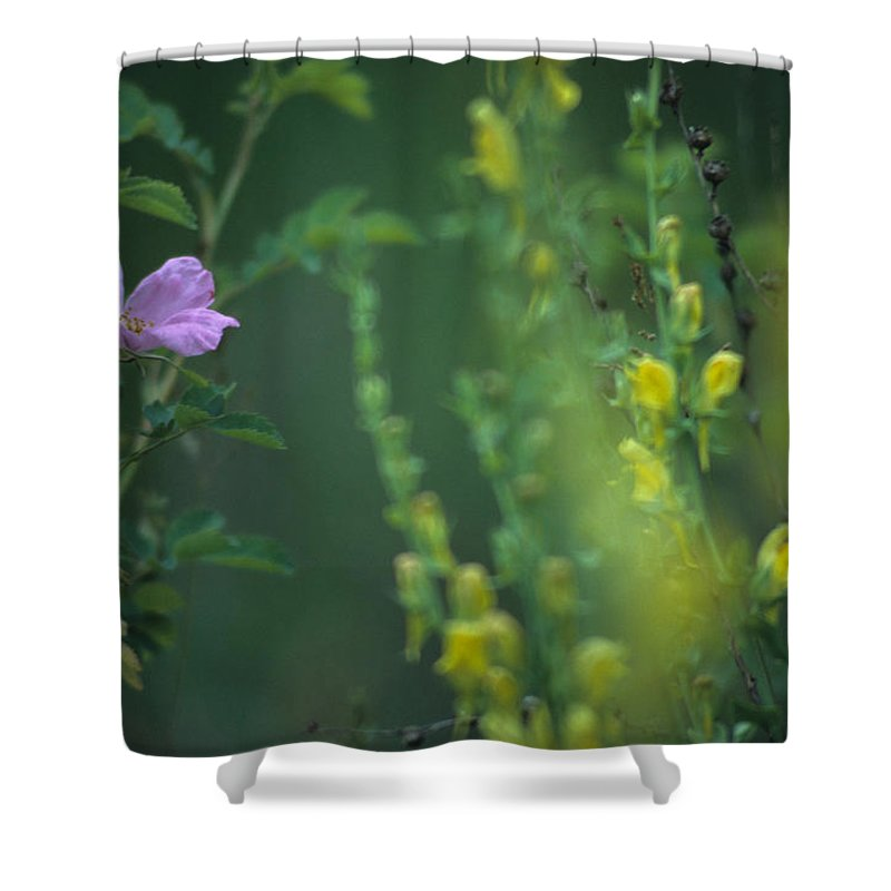 Nootka Rose Shower Curtain featuring the photograph Nootka Rose And Yellow Toadflax by One Rude Dawg Orcutt