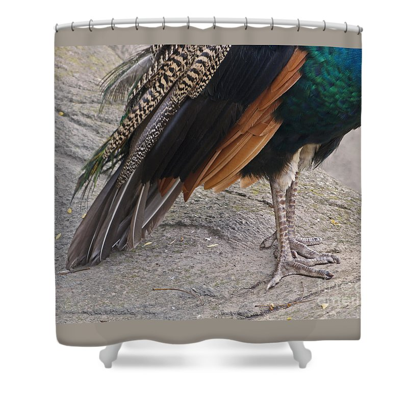 Peahen Shower Curtain featuring the photograph Her Kind Of Beauty by Ann Horn