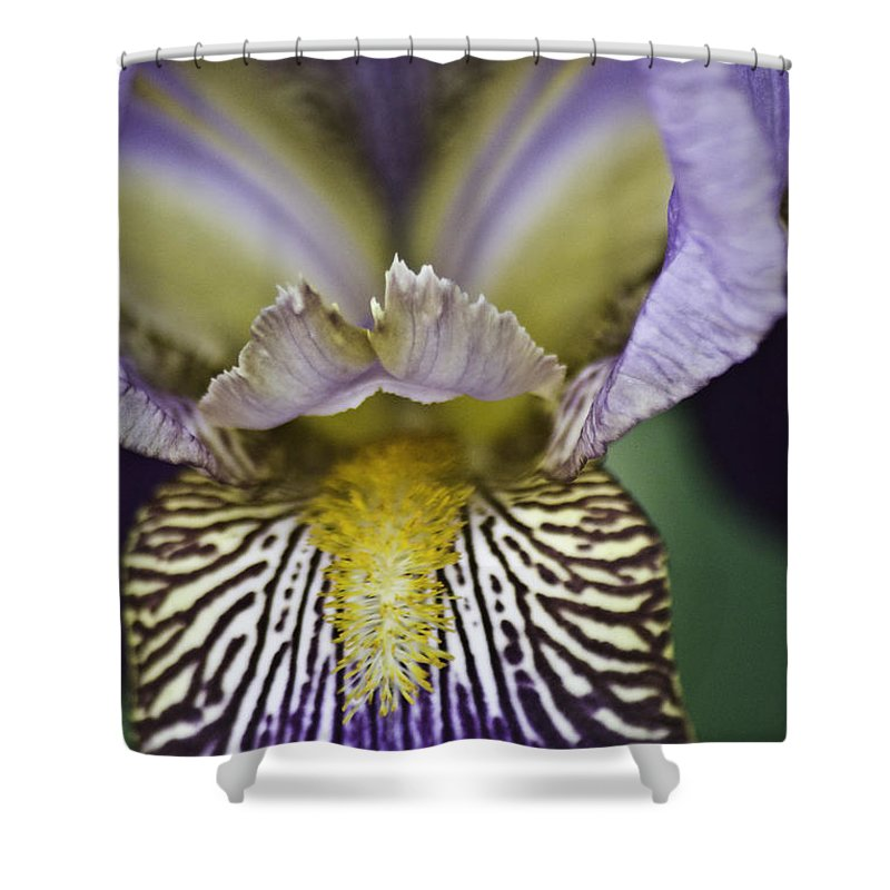 Flower Shower Curtain featuring the photograph Now That's A Beauty by Trish Tritz