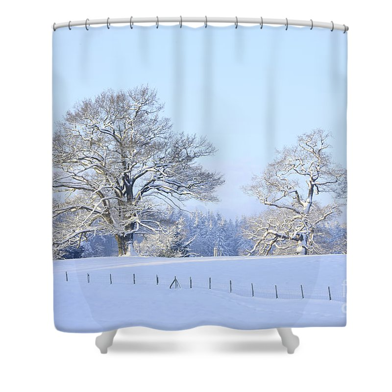 Landscape Shower Curtain featuring the photograph Oak In Snow by Mark Taylor